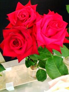 真紅のバラ.jpg