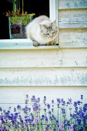 cat ネコと窓.jpg