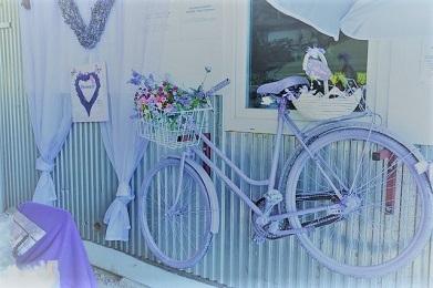 lavender-自転車2 (2).jpg