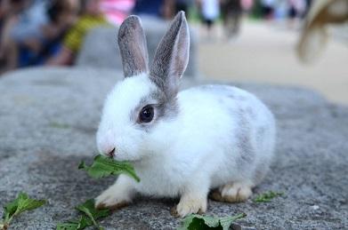 rabbit-うさぎ2.jpg