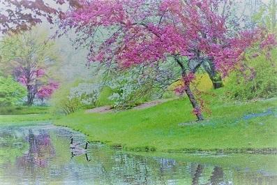 spring-ピンクのツリー 水辺2_0.jpg