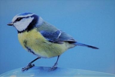 bird青 (2).jpg
