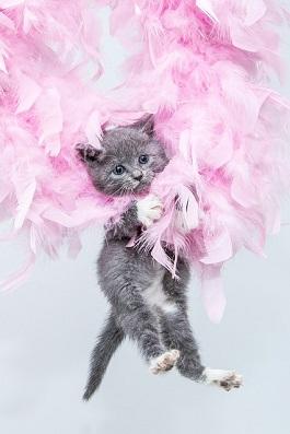 kitten-100.jpg