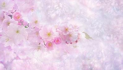 nature-桜の花2.jpg