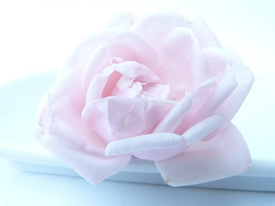 rose-淡いピンク色0_0.jpg